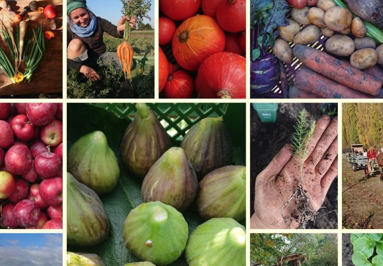 Gemüse-Impressionen